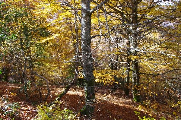 Bosque de España